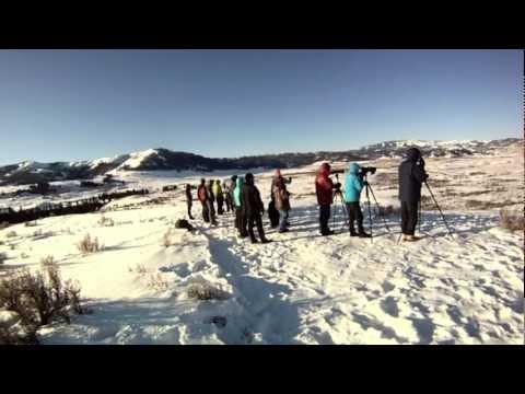 Yellowstone Field Studies 2012 | By Clinton Begley