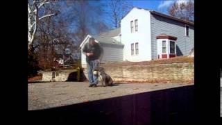 Pit Bull Obedience Dog Training Cincinnati - Dog Trainer