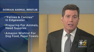 Felines Andamp Canines Shelter Helping Rescue Animals From Hurricane Dorian