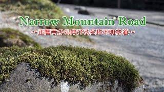 Narrow Mountain Road~正暦寺から伸びる名称不明林道~150121