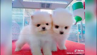 Cutest Puppies in The world 🌎 | Supper funniest pets | Animal Planet Ever #15