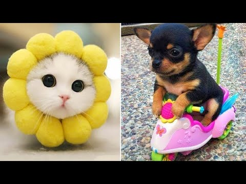 Baby Animals 🔴 Funny Cats and Dogs Videos Compilation (2020) Perros y Gatos Recopilación #39