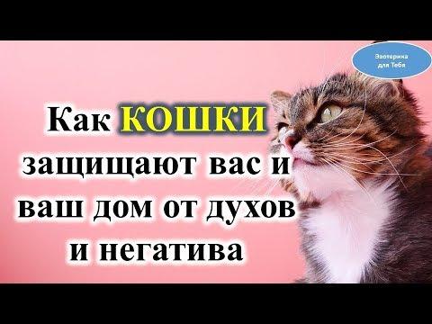Как кошки защищают вас и дом от духов и негатива @Эзотерика для Тебя: Гороскопы. Ритуалы. Советы.