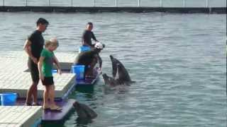 Subic Ocean Adventure Girl Dances with Dolphins