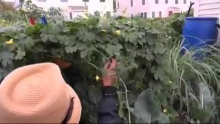 Warga Indonesia Bertani di Amerika - Liputan Feature VOA Mp3