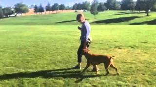 Focus Dog Training: Training An Aggressive Dog