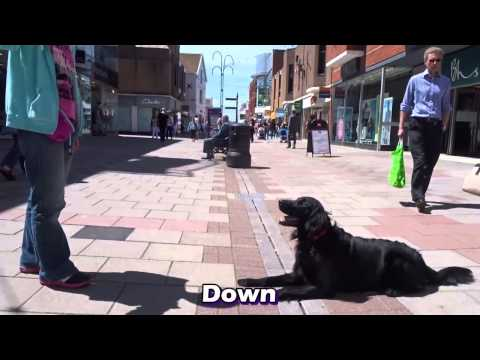 Storm  Flatcoat Retriever  4 Week Residential Dog Training at Adolescent Dogs