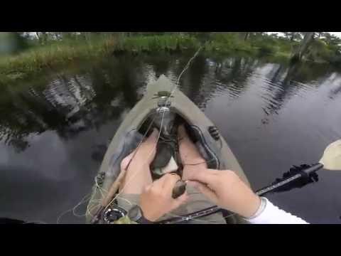 Bayou Cane On The Fly