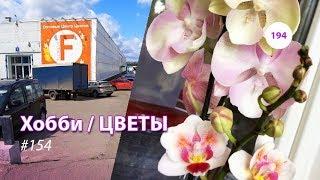 194#154 / Хобби-Цветы / 08.2019 - Floreville (ФЛОРЭВИЛЬ. МОСКВА)