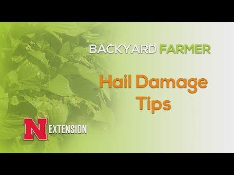 Hail Damage Tips