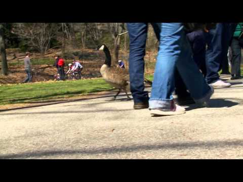 Birders: The Central Park Effect - Trailer