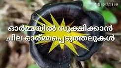 Send Off Kutec Mananthavady
