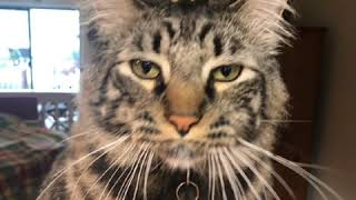 Amos The Cat talks about COVID19