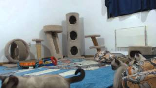 Clone Trooper Kittens - Nala is Sproingy