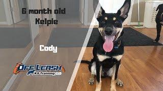 AUSTRALIAN KELPIE / DOG TRAINING