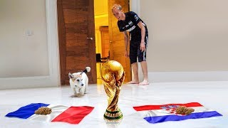 DOG PREDICTS WORLD CUP FINAL!