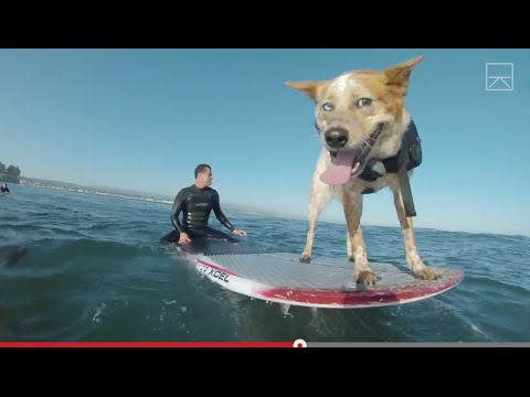 Meet The Dog That Surfs Better Than You