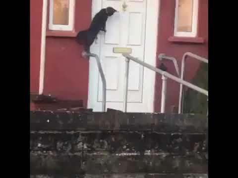 Frosty - Cat uses the door knocker