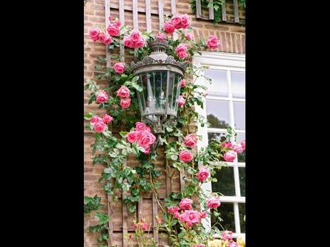 Вьющиеся растения: какие выбрать для украшения сада
