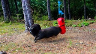 What happens when you leave a boxing bag in the Forest