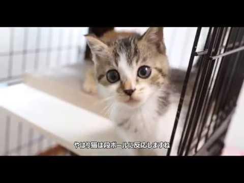 保護した子猫 キャットケージへ