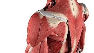 Мышечная боль после тренировки. Как облегчить её