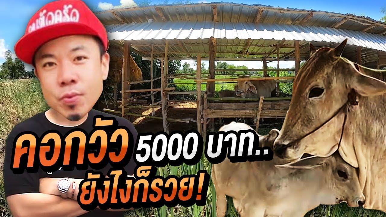 สร้างคอกวัวด้วยทุน 5,000บาท ยังไงก็รวย!!!!!