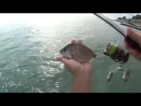 Rockfish 2019 Сочи 24 августа караси Игорь Зинковский