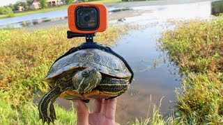 i-strapped-a-gopro-on-a-turtle