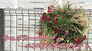 クランベリーとカルーナのハンギングバスケット【ウチ花】15株使ったボリューミーな時の植え方 thumbnail