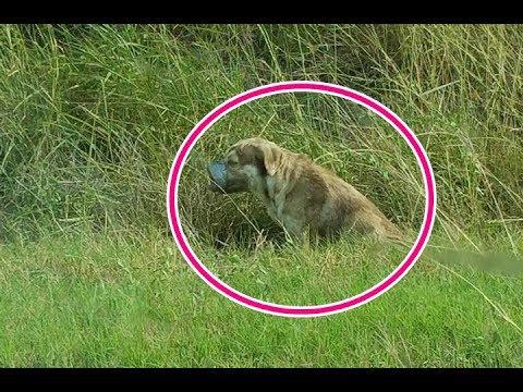 【感動実話】口と脚にテープを巻かれ捨てられても、犬は尻尾を振ることを止めなかった。