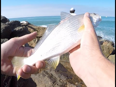 Surf Fishing Oxnard And Ventura