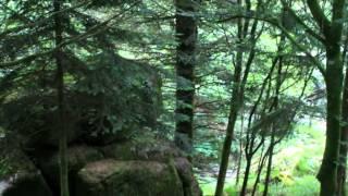 La Forêt de Huelgoat