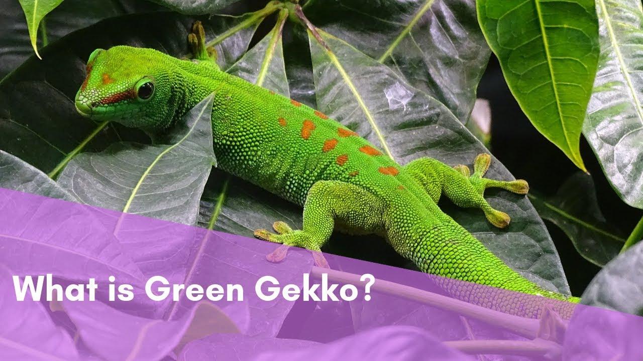 gekko install)