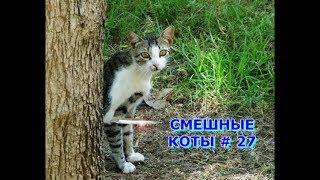Приколы с кошками и котами #27. Подборка смешных и интересных видео с котиками и кошечками 2017