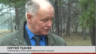 Защита от клещей. Новости 19/04/2018. GuberniaTV