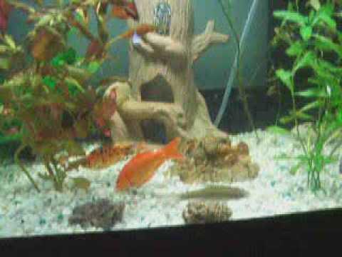 L 39 acquario dei miei pesci rossi completamente for Pesci acquario