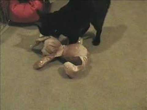 'Bedtime for Yoda the Manx Kitty Cat'