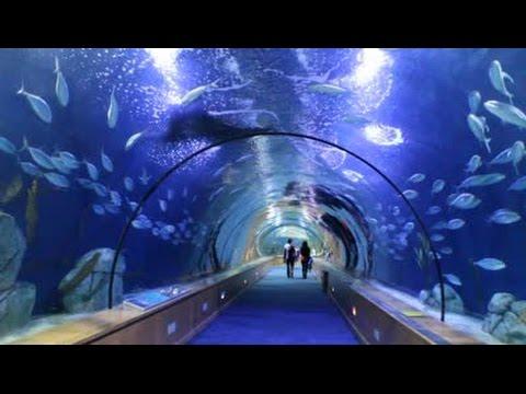 Hiszpania#2 Walencja oceanarium ,rekiny,morsy,pokaz delfinów