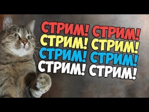 ЧУНЯ LIVE ❆ СТРИМ 14.12.2019