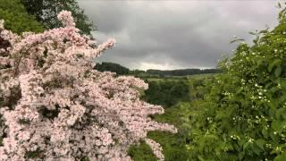 Edvard Grieg - An den Frühling, To Spring (Piano)