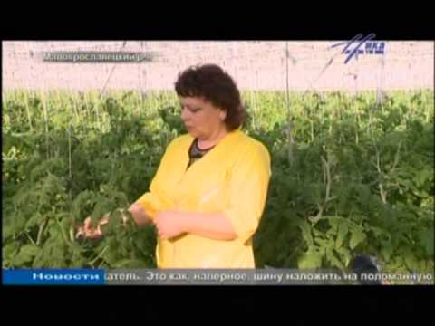 Выращивание овощей в современных теплицах