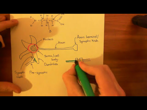 The GABA-A Receptor and the Benzodiazepines Part 1