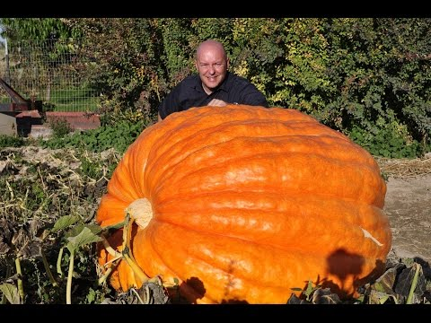 Idaho's Pumpkin man * Cliff Warren