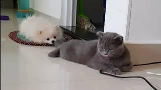 Собака тянет кота за хвост .