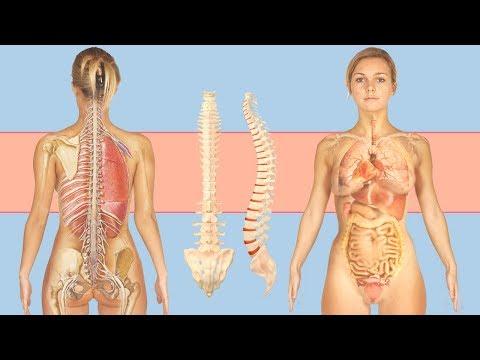 Могут ли от остеохондроза болеть внутренние органы