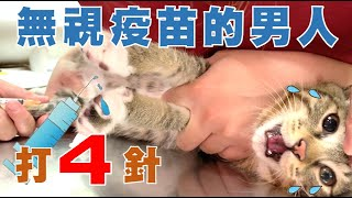 【SoybeanMilk Cat】Vaccines Are Ineffective for Stupid Cats?!