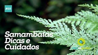 Samambaias - Dicas e cuidados #65