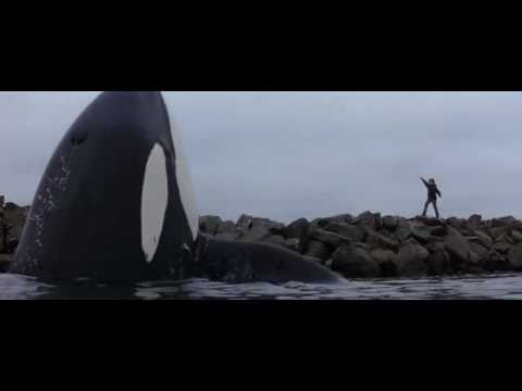 BEST ENDING EVER - FREE WILLY