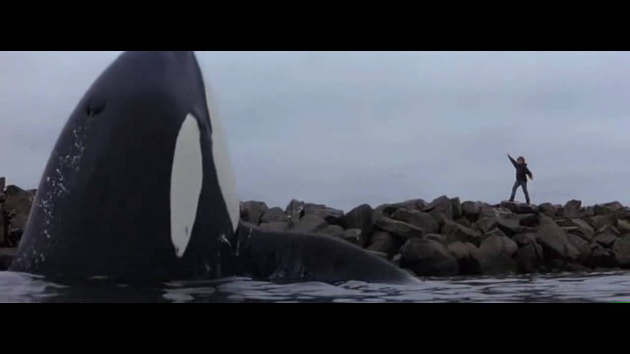 Free Willy Cake Scene